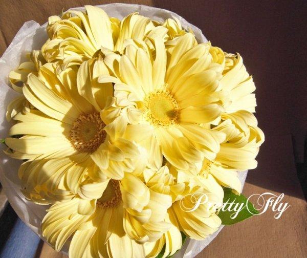 画像2: 【一種の花で束ねるシンプルブーケ】OnlyGerbera〜ガーベラ パスタの花束