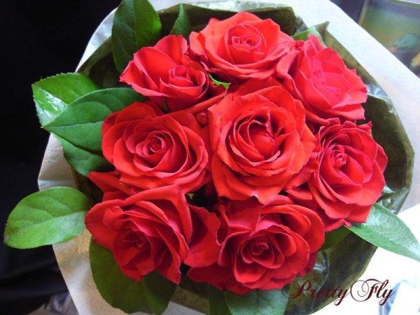 画像1: 【一種の花で束ねるシンプルブーケ】OnlyRedRose〜赤いバラ花束