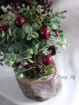 画像2: 【ドライフラワー&造花】リンゴの木(グリーンリーフ) (2)