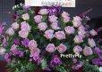 画像5: 紫のバラスタンド花-バラ30本スタンド花〜パープルローズ (5)
